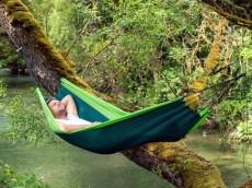 Silk Traveler Forest